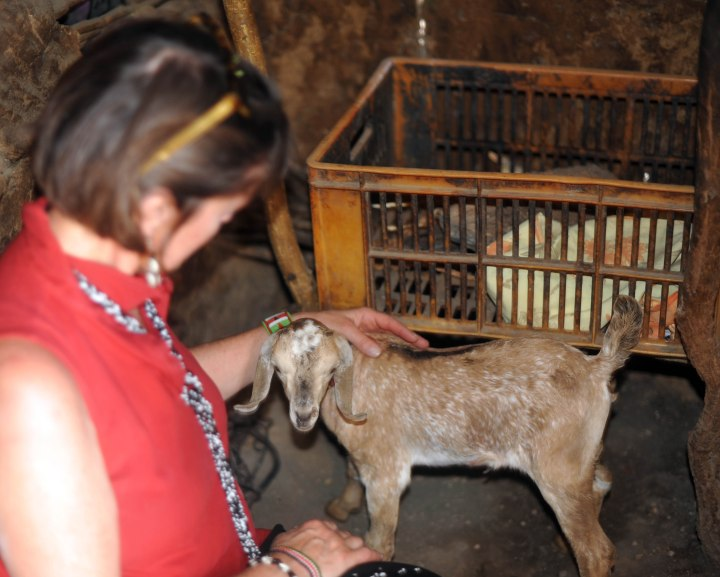 Baby goats are protected from predators inside the boma--I loved petting this one!