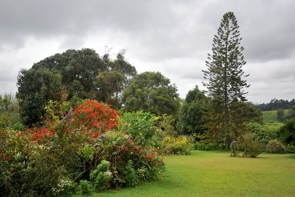 The garden at the Tea Farm
