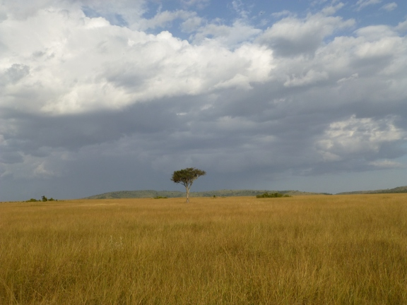 Beautiful Kenya!