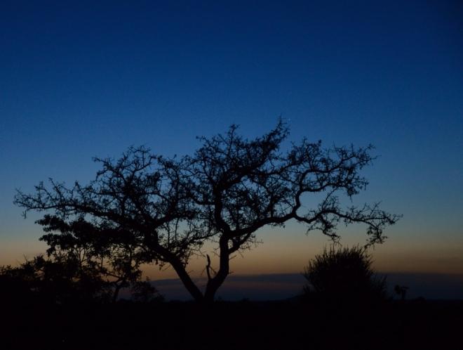 Nyumbani Village as night falls