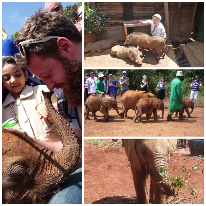 Baby elephants AND warthogs at the Elephant Orphanage